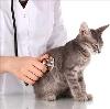 Ветеринарные клиники в Апастово